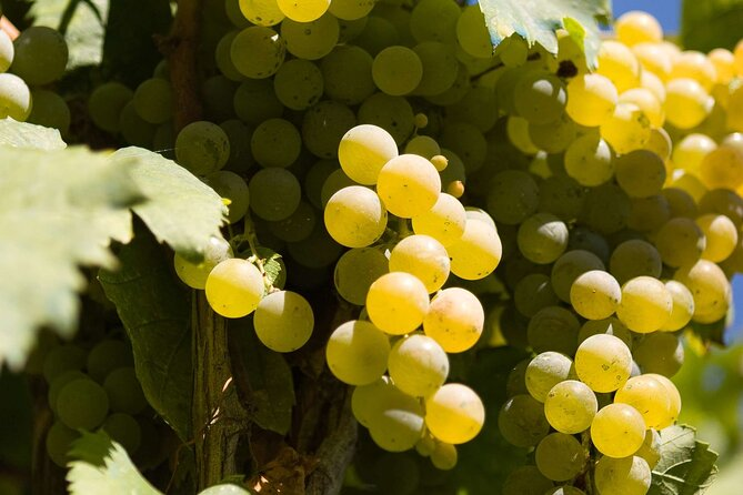 Guided Wine Making Tour in Irpinia with Tastings