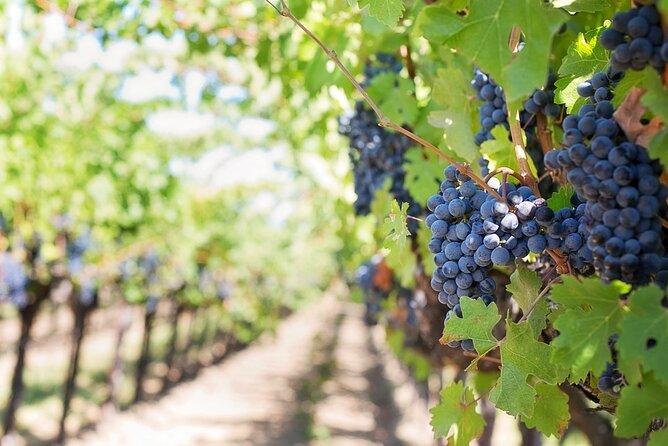 Wine Tasting and Visit to Sant'Agata de 'Goti cellars
