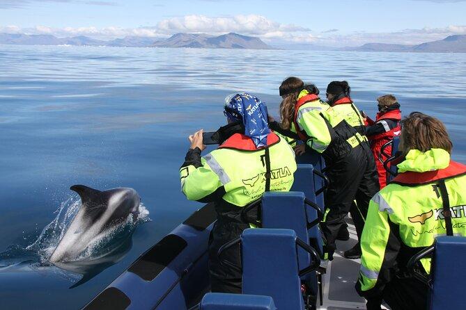 Speedboat Whale Watching in Reykjavík Iceland - Small group