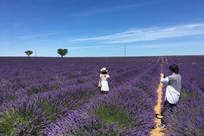 4-Hour Lavender Fields Tour in Valensole from Aix-en-Provence