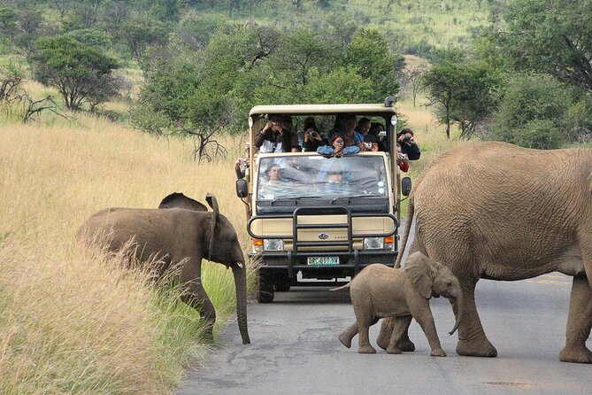 Pilanesberg Safari Open vehicle guided game drive (Sun City at guest's option)