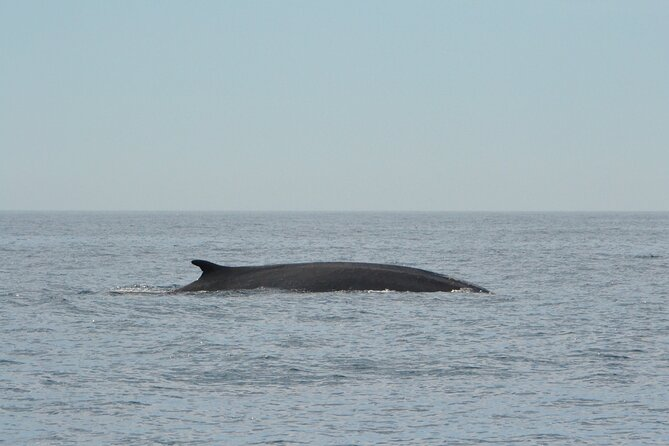 8-Hour Whale Watching in Barcelona