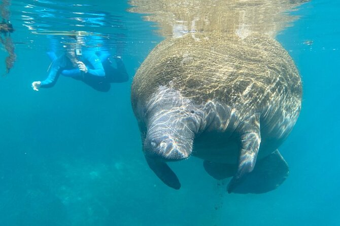 Manatee Snorkel Tour from American Pro Diving Center