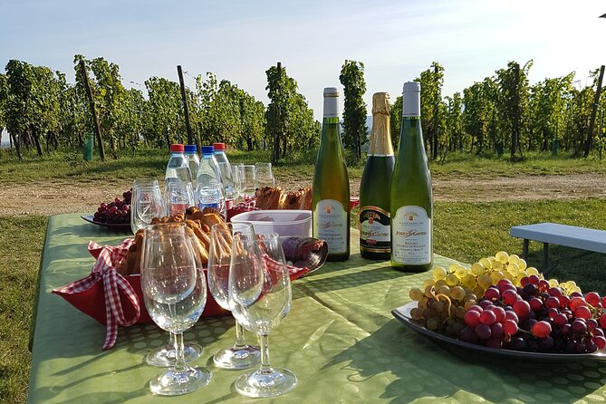 2 Wine-Tastings Private Tour: In the vineyard and at the winery!