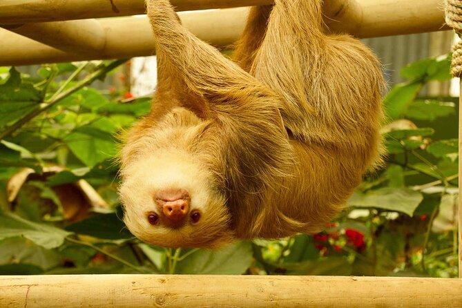 Monteverde Cloud Forest Zip Lines, Hanging Bridges, Sloth Sanctuary and Exhibits