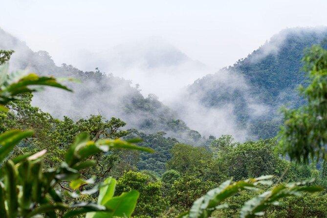 Bosque Nuboso de Mindo