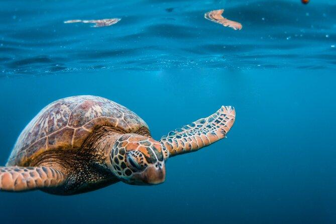 Reef Snorkelling Tour