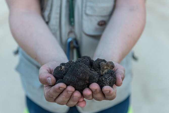 Truffle Lunch & Hunting Experience in San Gimignano