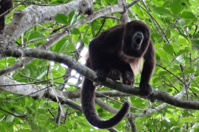 Full Day: Churute Forests & Cocoa Farm Tour (Departure from Guayaquil)