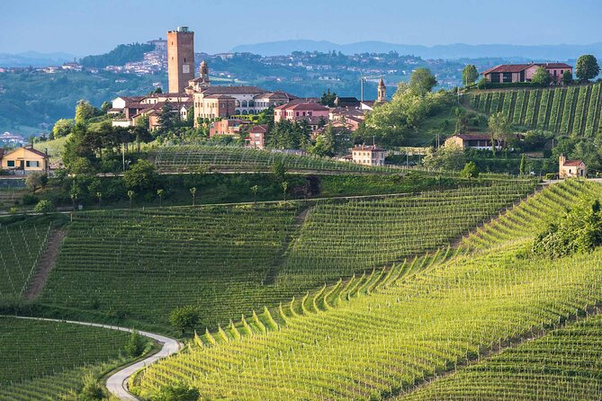 Guided hike in Barbaresco with wine tasting