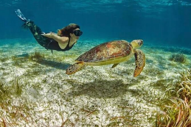 Snorkeling tour by boat amazing excursion to the turtle area Free transportation