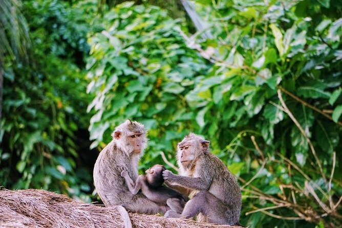 Private Tour An Exciting Journey around Ubud with Lots of Things to Experience