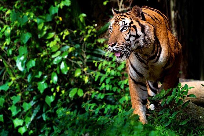 Ranthambore National Park: Skip the Line Shared Safari Admission