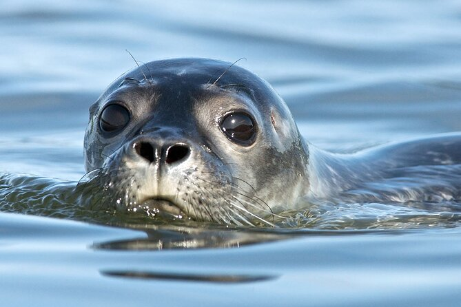 Seal Watch Boat Tours - Pictou NS