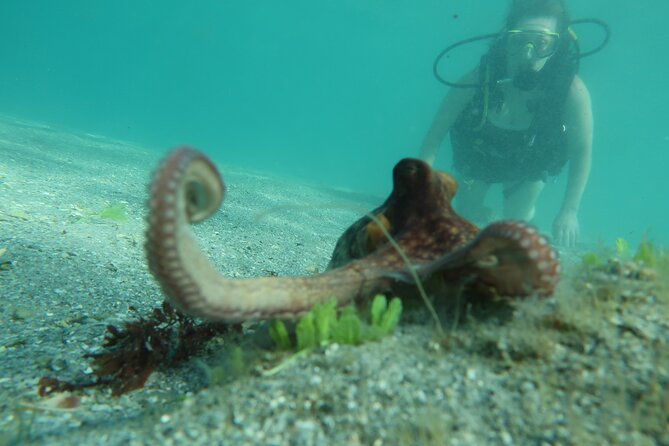 Private Scuba Lesson and Guided Tour One Day Course in Palm Beach Florida