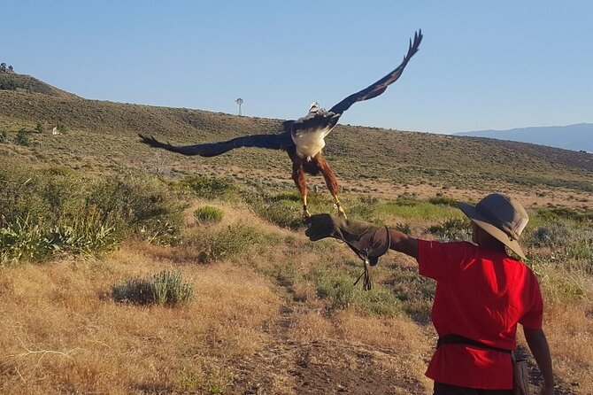 Experience Raptors and Falconry
