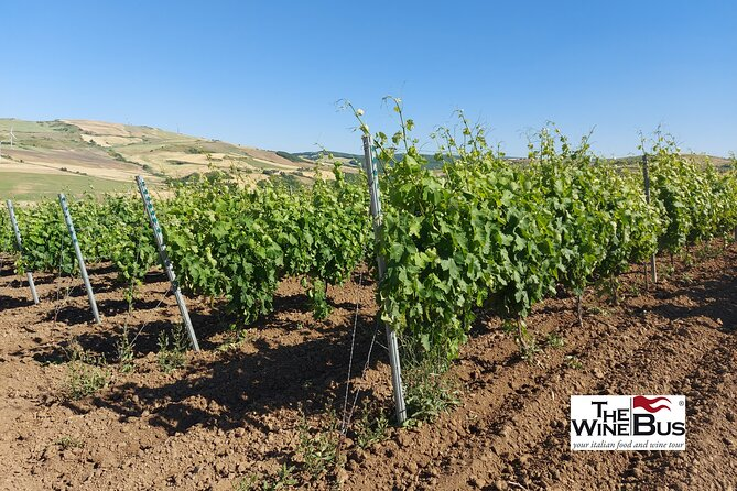 Private Vulture Wine Tour from Matera with sommelier