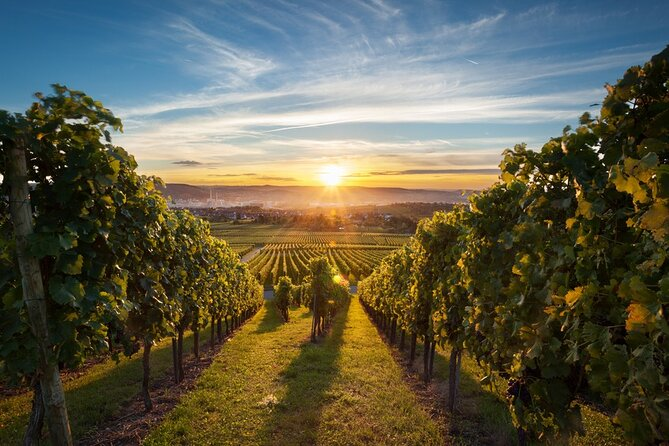 East Kelowna Wine Tour from Vernon - Classic - 6 Wineries