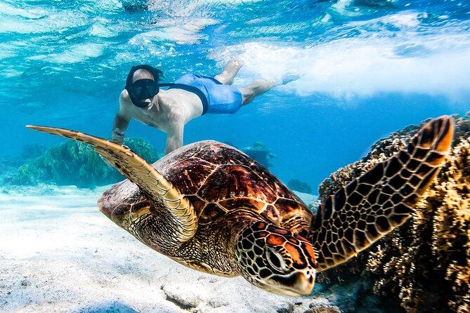 Cook Islands Turtle Tour