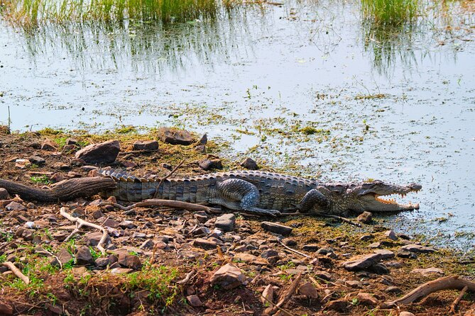 National Chambal Sanctuary Tour From Sawai madhopur
