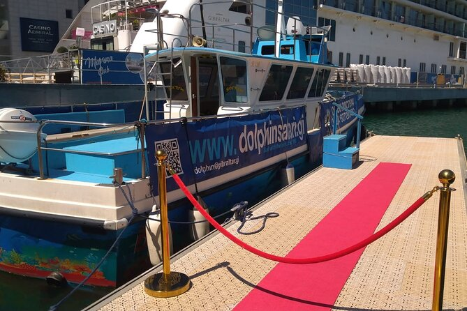First-Class Sailing in Gibraltar with Dolphin Safari