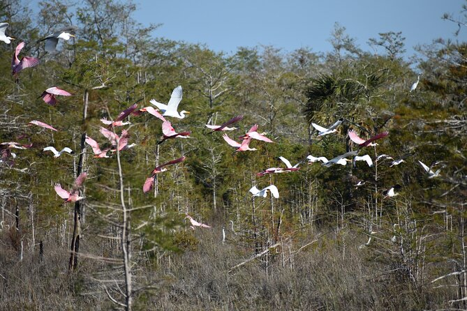 All Day Everglades Tour w Airboat + Big Cypress Preserve + Ten Thousand Islands