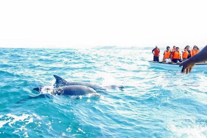 Key West Dolphin Snorkel tour or other options