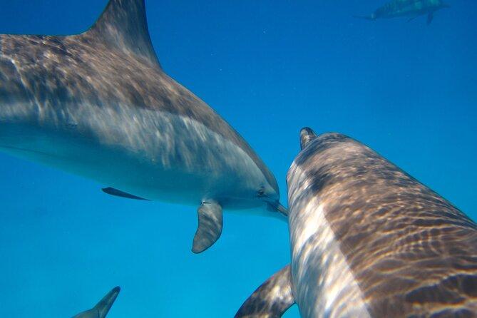 Dolphin House ( ROYAL MASSAGE ) - VIP Snorkeling Sea Trip & water Sport-Hurghada