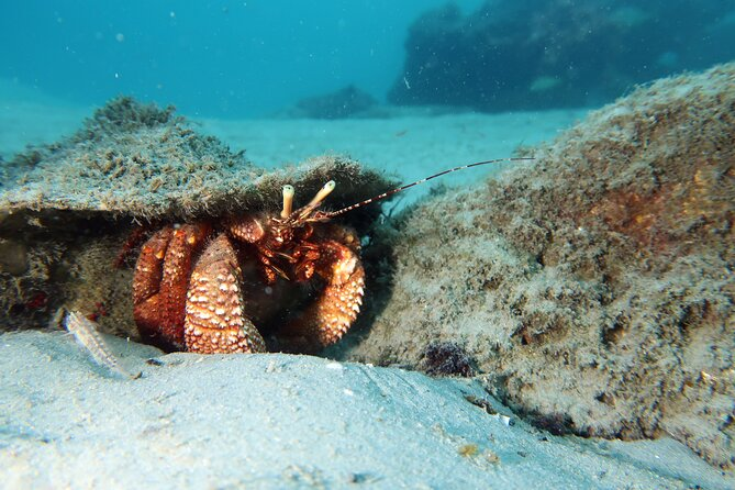 Best Snorkeling in Palm Beach a Private Guided Tour with Lessons All Inclusive