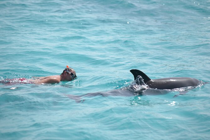 4 Hours Snorkeling With Dolphins &Water Games By Private Speed Boat - Hurghada