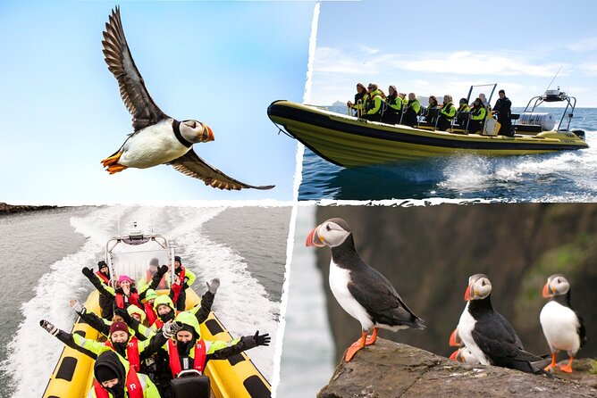 Puffin Tour by RIB Speedboat from Downtown Reykjavik