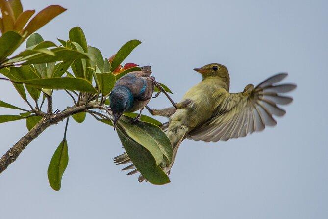 Birdwatching Tour: unlock the wonder, whether beginner or advanced