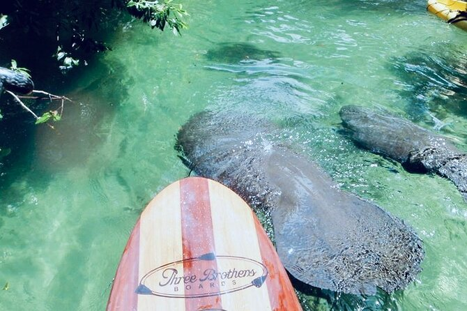 Orlando Manatee and Natural Spring Adventure Tour at Blue Springs