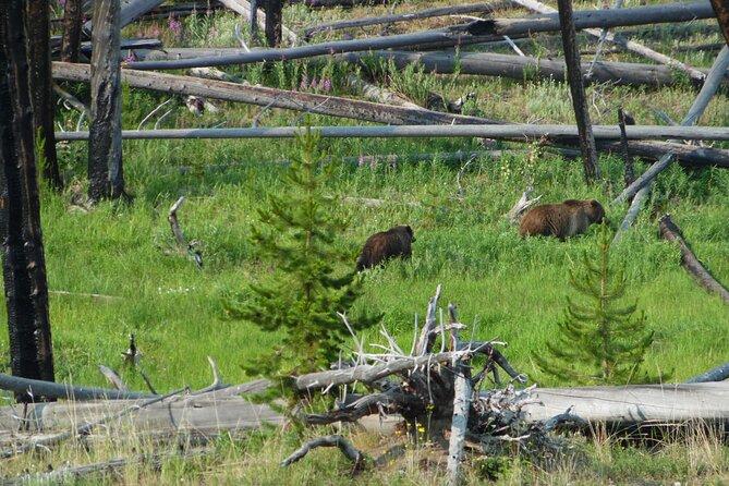 Full-Day Private Safari of Yellowstone