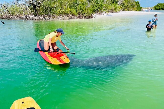 Dolphin and Manatee Adventure Tour of Fort Myers