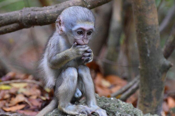 Barbados Small-Group or Private Garden & Wildlife Half-Day Tour