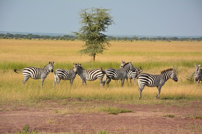 4-Day Tanzania National Parks Safari from Arusha