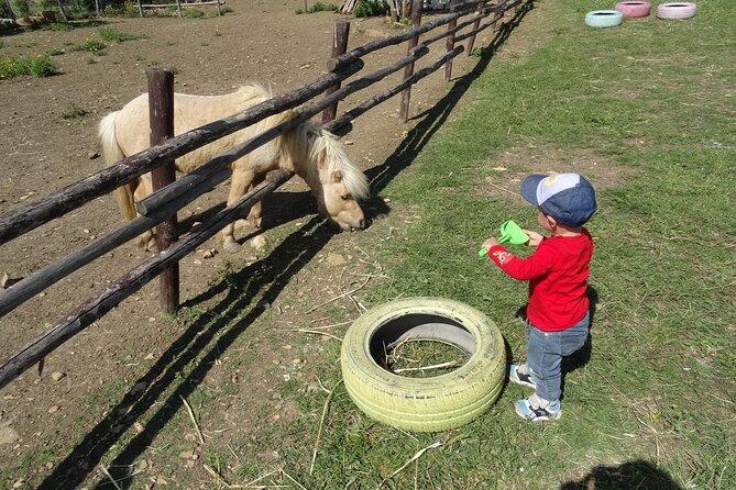 Tour for children to discover Civitavecchia and visit to the Farm