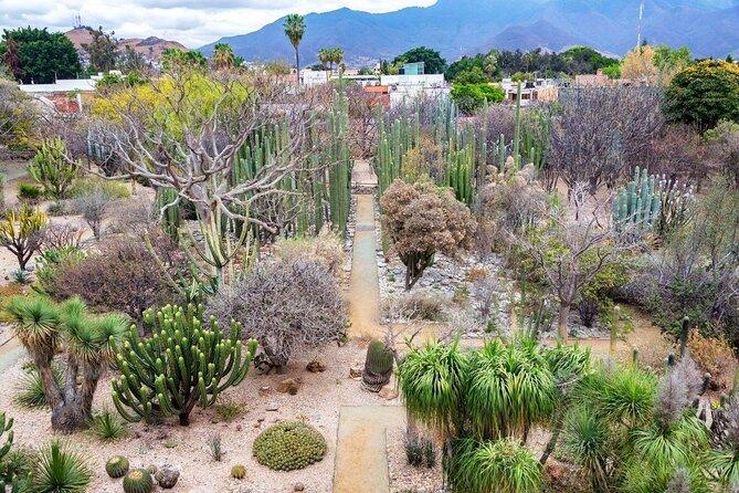Oaxaca Ethnobotanical Garden (Jardín Etnobotánico de Oaxaca)