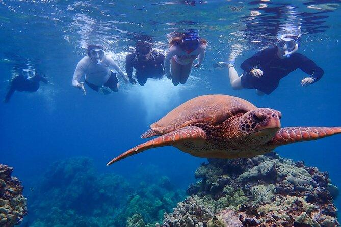 Turtle Town Kayak & Snorkel Private Tour (7am-10am)