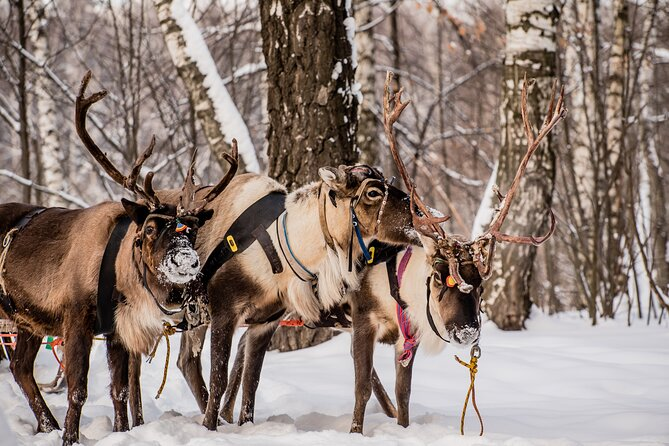Half-Day Reindeer Ride and Ice fishing Experience in Levi