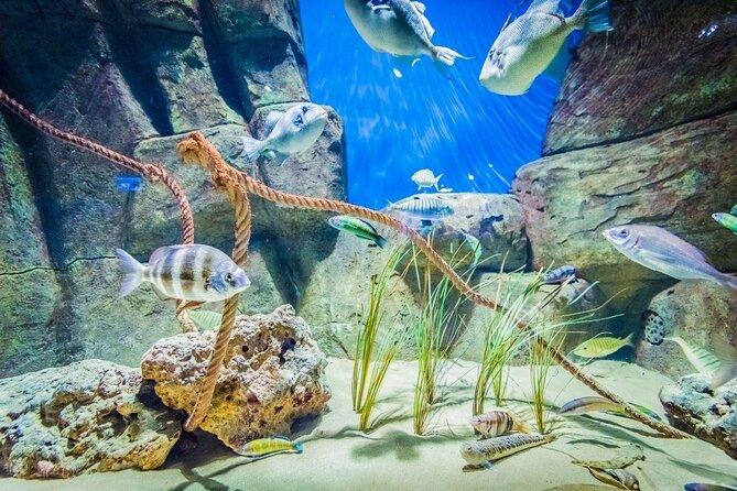 Seville Aquarium (Acuario de Sevilla)