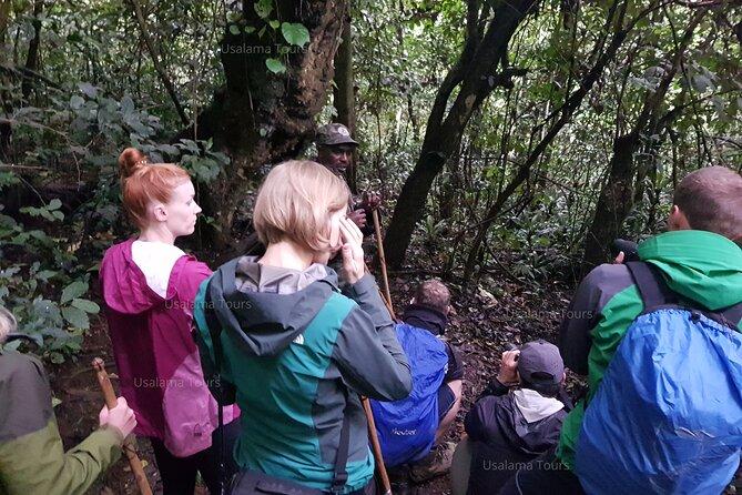 2 Days Chimpanzee trekking & Canopy Walk in Nyungwe National Park