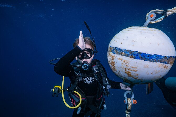 Small Group Shark and Turtle Dive for Certified Divers
