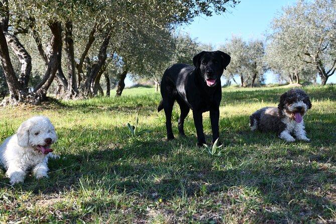 Truffle Hunting Private Experience in Siena Tartufi