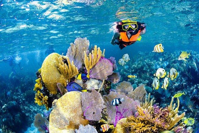 Tulum Area Experiences Guided Snorkeling Tour - Casa Cenote + Ocean Reef & Lunch