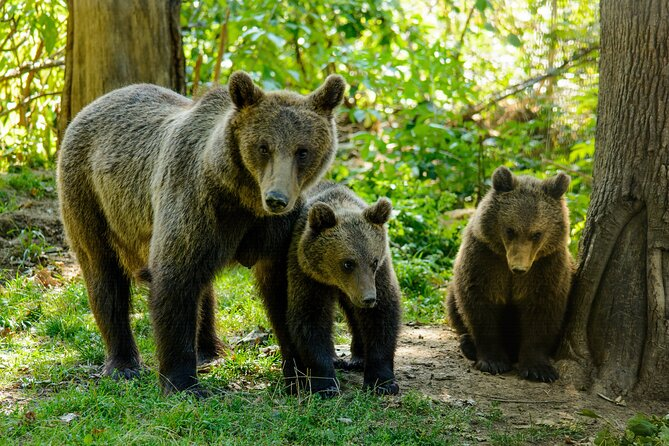 Bears Sanctuary, Dracula Castle and Poiana Brasov-Private day tour from Brasov