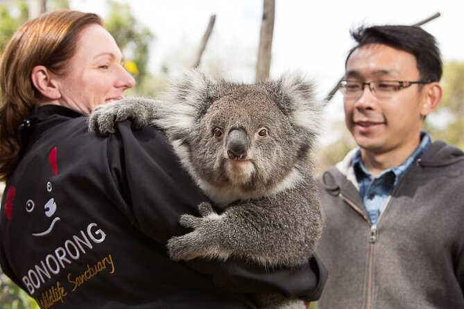 Bonorong Wildlife Park and Richmond Afternoon Tour from Hobart