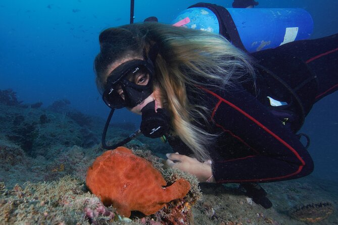 Caño Island Diving Tour with Lunch
