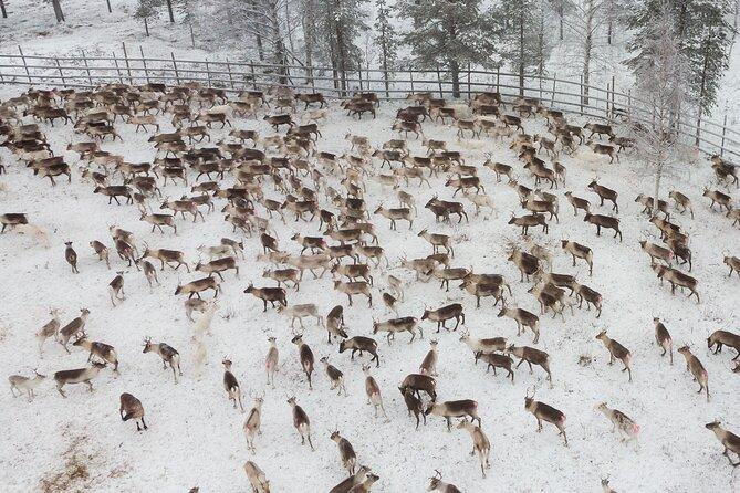 Reindeer Husbandry Experience